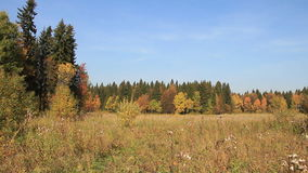 Trees among a grass on a forest glade in the fall stock video footage