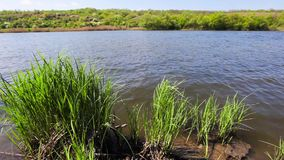 Trees and grass growing in a lake stock video footage