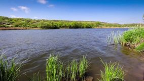 Trees and grass growing in a lake. On a warm summer day stock footage