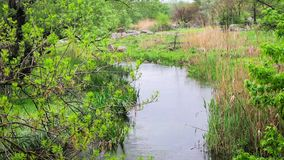 Trees and grass growing in a river. On a warm summer day stock video