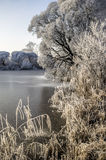 Trees and grass are in hoarfrost on the lake, covered with ice, frosty morning Stock Images
