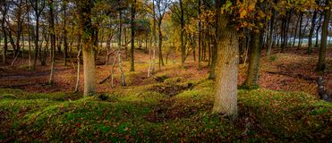 Woodland scene in the forest stock photos