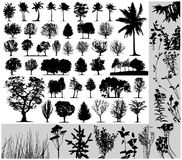 Trees, grass, plant vector. On white background Royalty Free Stock Photo