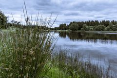 Trees and grass reflections in the water of a tranquil lake. Silkeborg, Denmark, June 21, 2017 Royalty Free Stock Photo