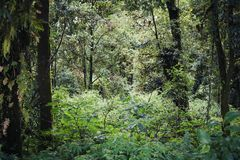 Trees and grasses in tropical forest. Landscape image of trees and grasses in tropical forest Royalty Free Stock Images