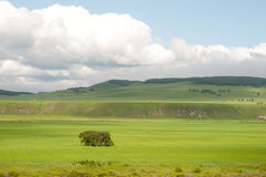 Trees in the grassland. July 2009,Hulunbeir,Inner Mongolia, China Stock Image