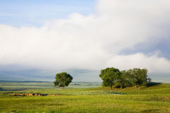 trees  in grassland Royalty Free Stock Photos