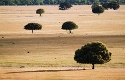Trees in the grassland in Cabañeros Stock Images