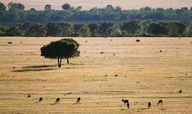 Trees in the grassland in Cabañeros Stock Photos