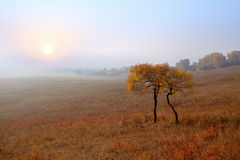 Trees and grassland in the morning Stock Photos
