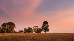trees in grassland at  twilight moment Stock Images