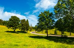 Trees on grassy hill along the road. Vivid summer landscape in mountainous area Stock Photo