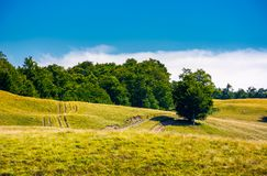 Trees on a grassy hillside in summer. Lovely nature scenery Royalty Free Stock Image