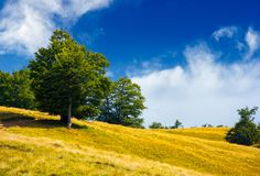 Trees on a grassy hillside in summer. Lovely nature scenery Stock Photos