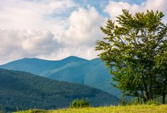 Trees on the grassy meadow in mountains. Tree on the grassy meadow in mountains. early autumn countryside with beautiful cloudscape. lovely nature background Stock Image