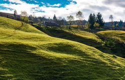 Trees on grassy rural hillside. Wonderful sunny autumn day in mountains Stock Photos