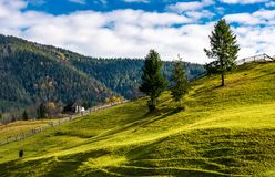 Trees on grassy rural hillside. Wonderful sunny autumn day in mountains Royalty Free Stock Photo