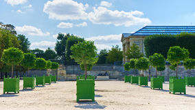 Trees in green boxes Stock Photo