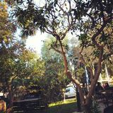 Trees. Green trees in Corfu island Greece Stock Photos