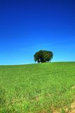 Trees in green countryside Royalty Free Stock Images