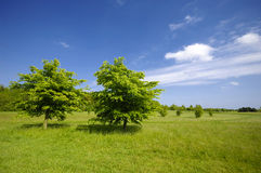 Trees on green field Stock Images