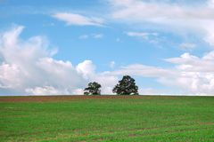 Trees in green field. Royalty Free Stock Image