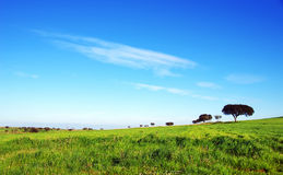 Trees on green field, alentejo Stock Photography
