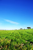 Trees on green field, alentejo, Stock Photo