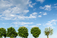 Trees on a green field and a cloudy blue sky Stock Photos