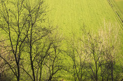 Trees and green field Stock Photography