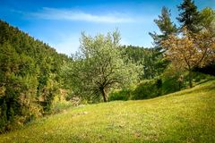 Different trees on green field of grass under blue sky. Trees on green field of grass under blue sky royalty free stock photography