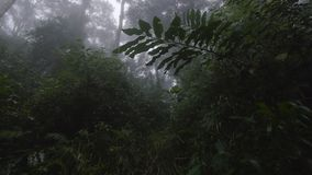 Trees and green field. A medium shot of a green field and trees with fog. Camera tilts up stock footage