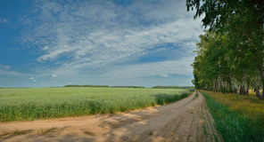 Trees and green field with road and blue sky Royalty Free Stock Photography