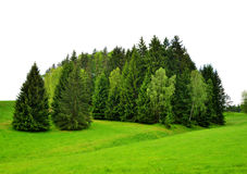 Trees on green field Royalty Free Stock Image