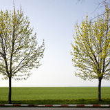 Trees and green fields Stock Photography
