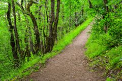 Trees in green forest, footpath. Beautiful green forest, Dense mountain wood Stock Images
