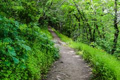 Trees in green forest, footpath. Beautiful green forest, Dense mountain wood Royalty Free Stock Photography