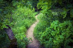 Trees in green forest, footpath. Beautiful green forest, Dense mountain wood Royalty Free Stock Photos