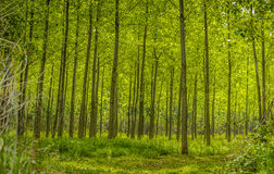 Trees in green forest Stock Photo