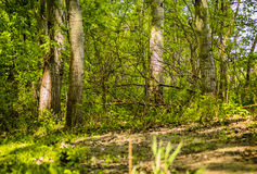 Trees in green forest Stock Photos