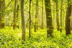 Trees in green forest Stock Images