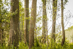 Trees in green forest Stock Image