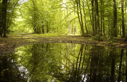Trees from a green forest reflecting in water stock image