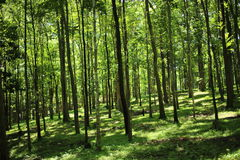 Trees and green forests Stock Photo