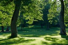 Trees in green garden Stock Photo
