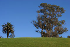 Trees and green grass on blue sky Stock Images