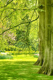 Trees, green grass and flowers at a park Royalty Free Stock Image