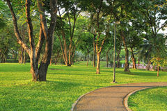 Trees and green grass in the park Stock Images