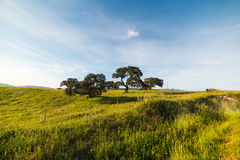 Trees on a green hill in Sardinia Royalty Free Stock Photos
