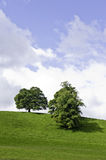Trees on a green hilltop. Two trees on top of a green lawn hill Stock Photos